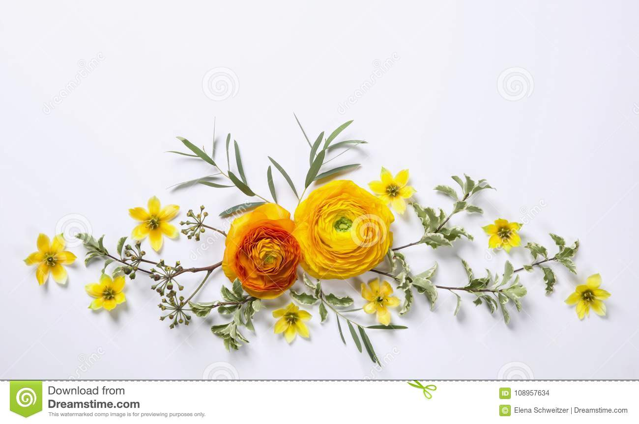 Yellow ranunculus on white background