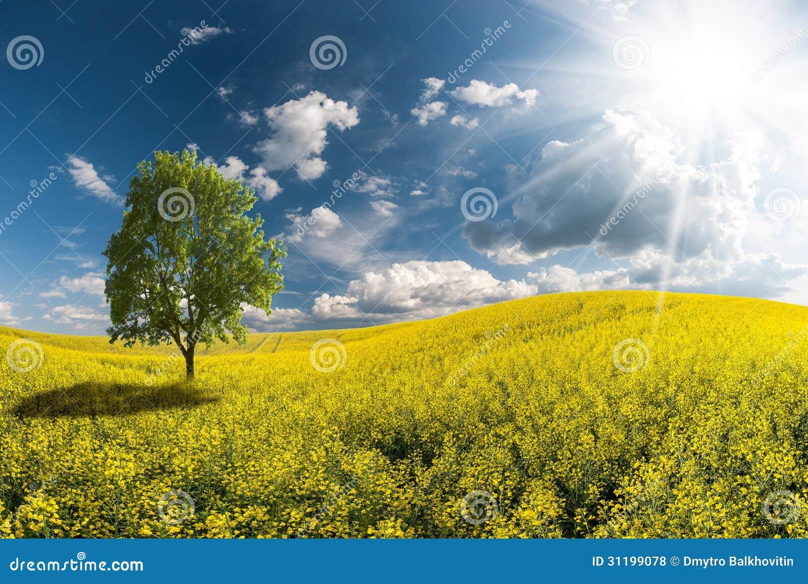 beautiful yellow field landscape - photo #24