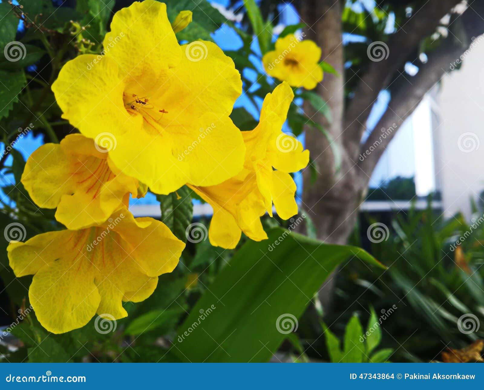 Yellow Rare Wild Flowers Stock Photo Image Of Countries 47343864