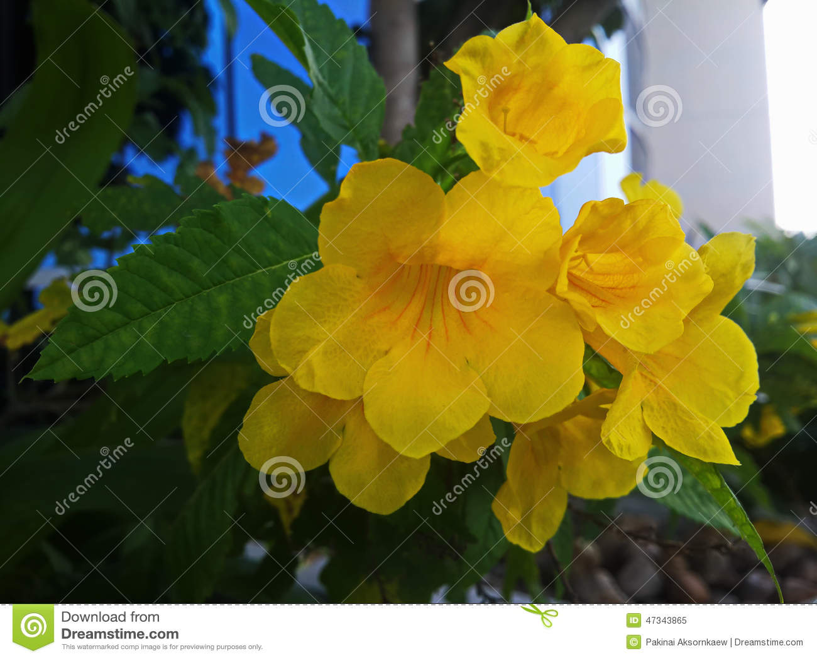 Yellow Rare Wild Flowers Stock Image Image Of Make Ever 47343865