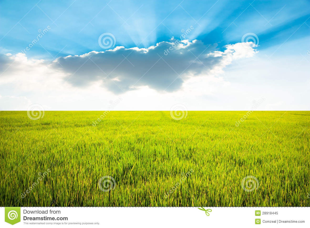 how to make yellow grass turn green