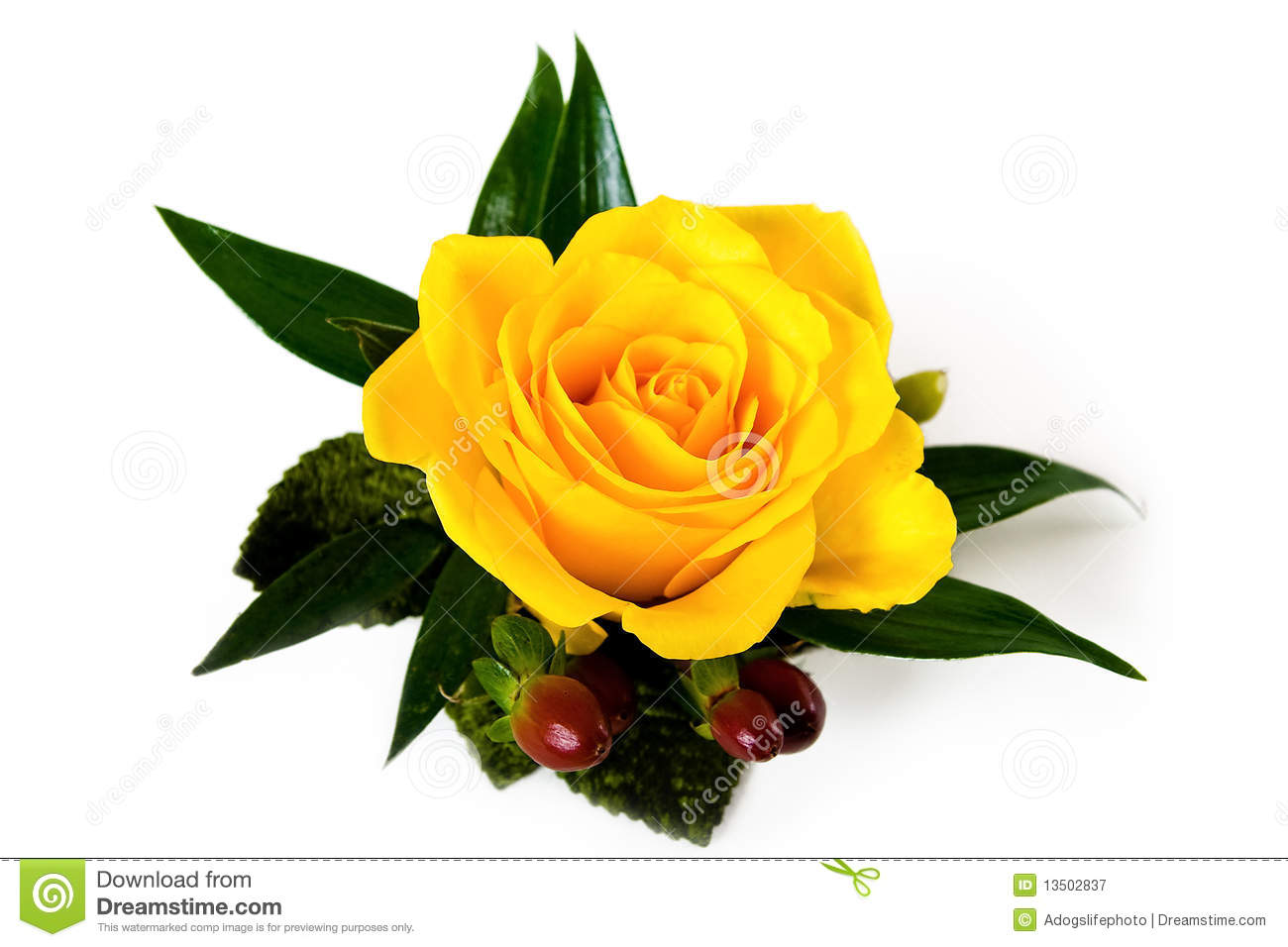 Yellow Rose Boutonniere With Autumn Accents Stock Image Image Of