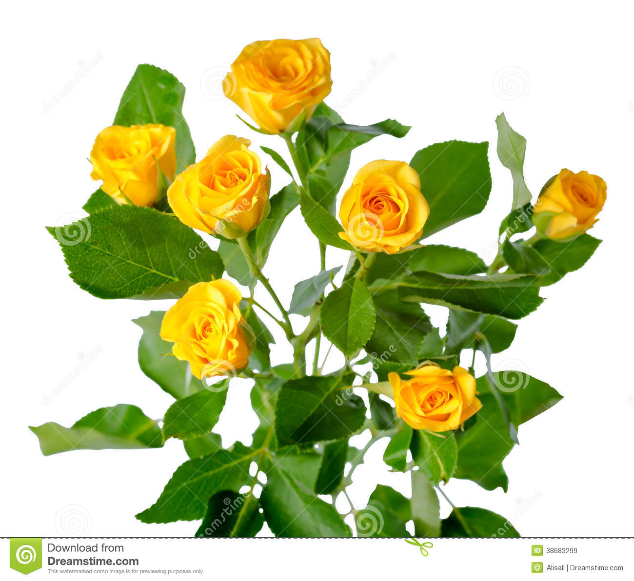 Yellow rose bush flowe...