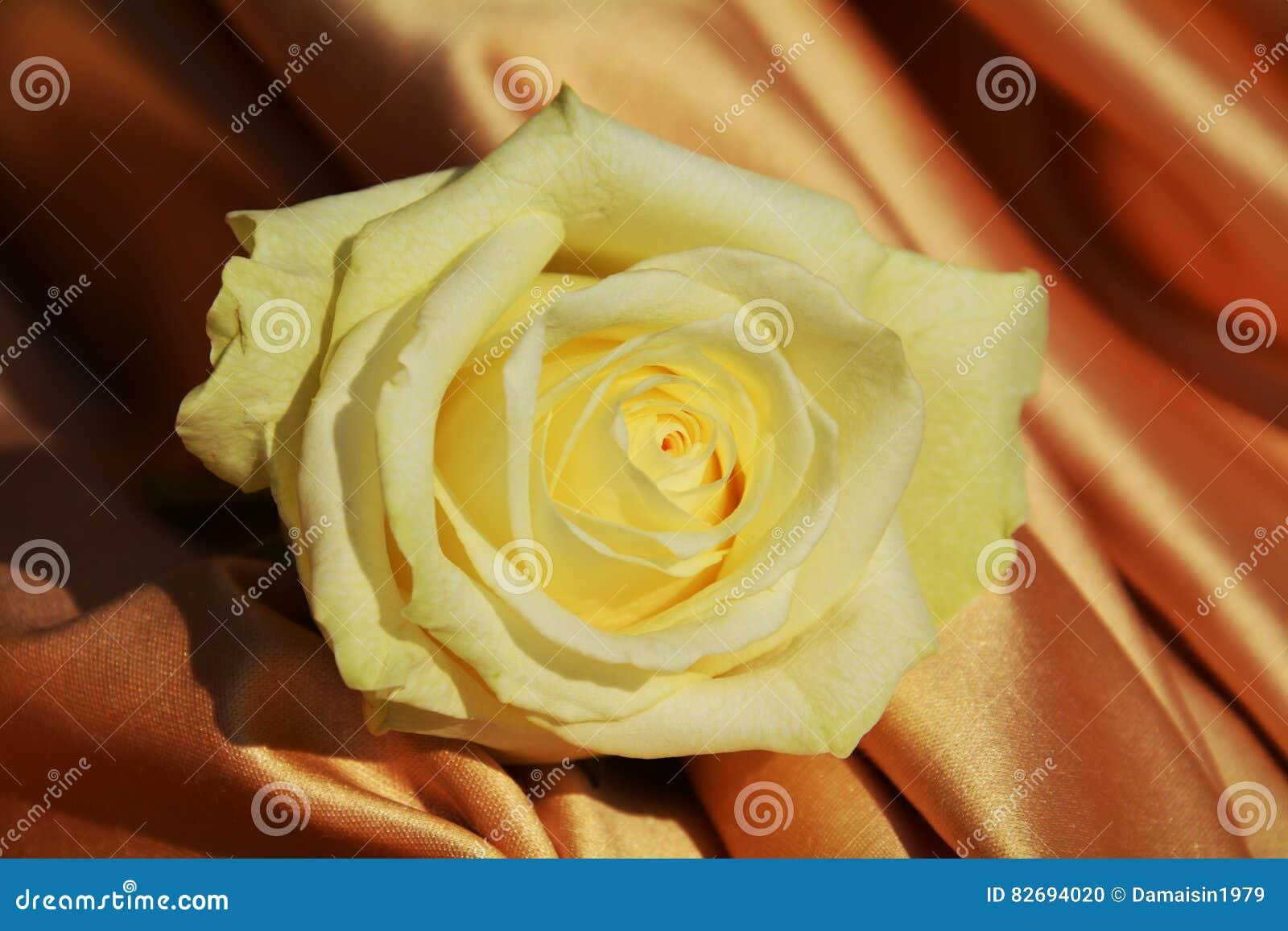 Yellow rose on an elegant fabric