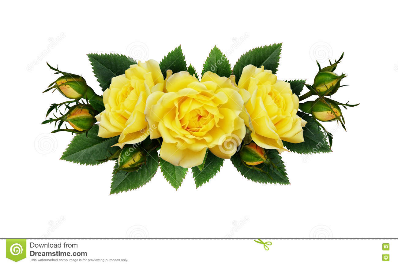 Yellow Rose Flowers Arrangement Stock Photo Image Of Spring Plant