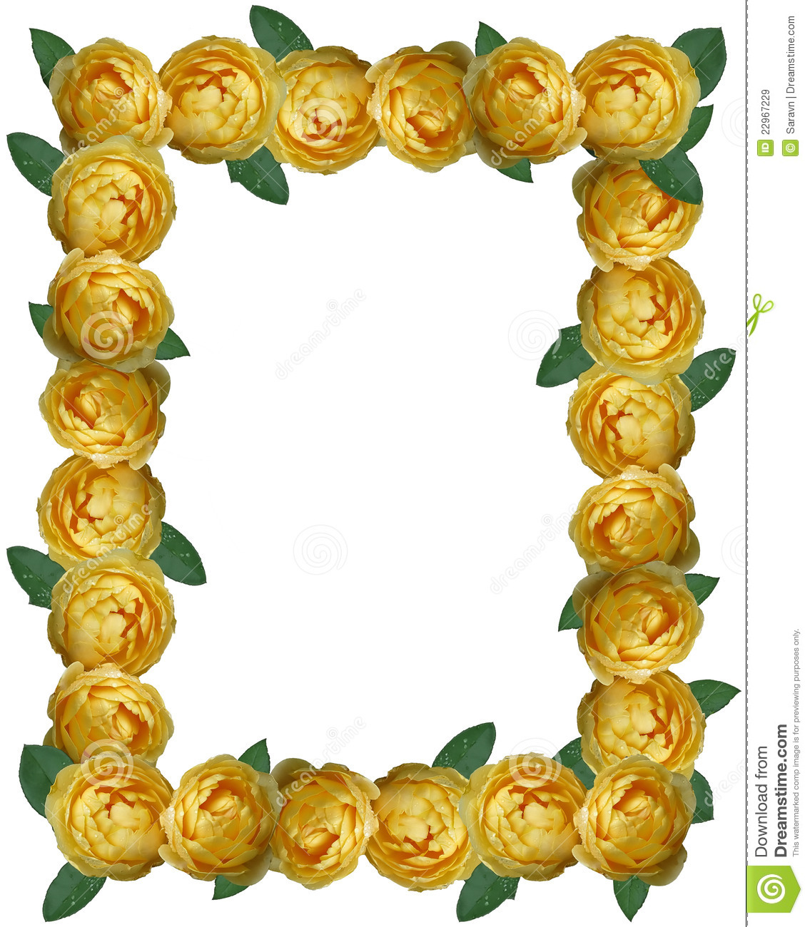 Yellow Rose Frame Background Royalty Free Stock Images ...