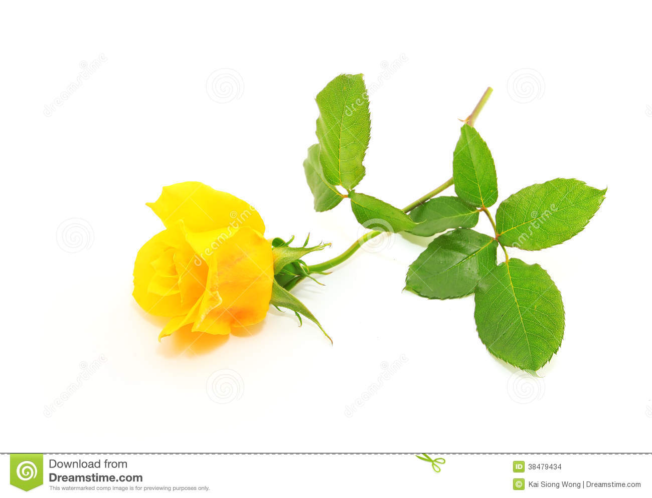Yellow Rose Stock Images - Image: 38479434