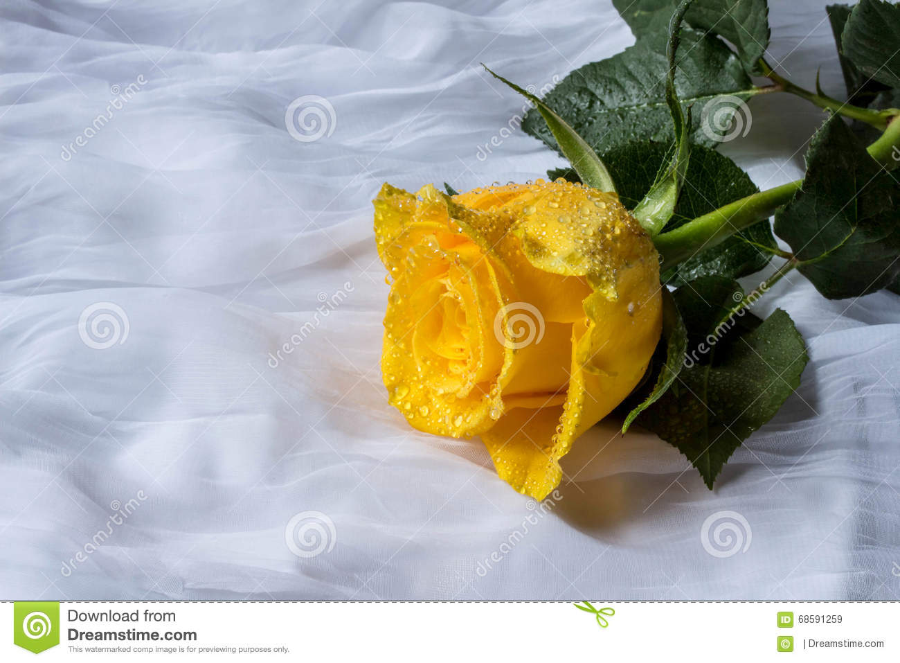 yellow roses with water drops - photo #38