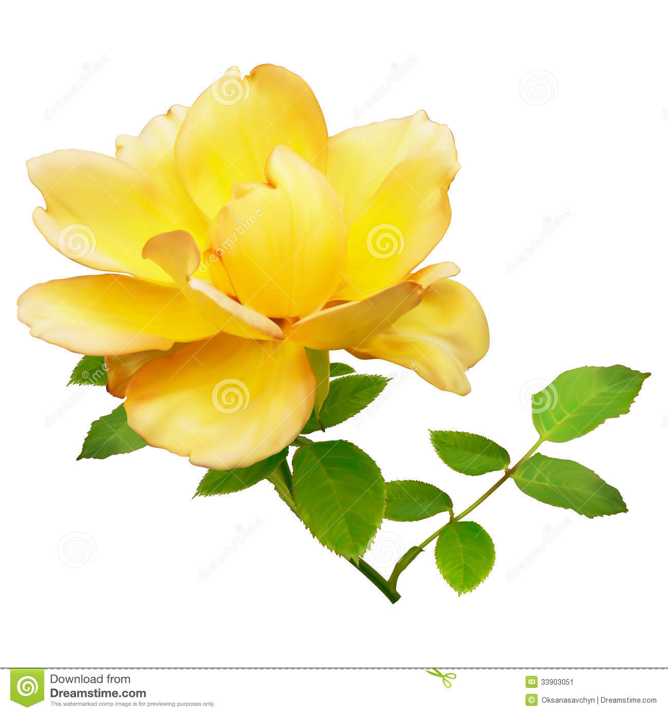 yellow rose stock illustration illustration of decorative