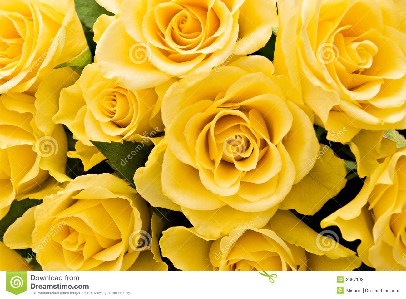 Yellow Roses Background Stock Photo Image Of Delicate 3657198