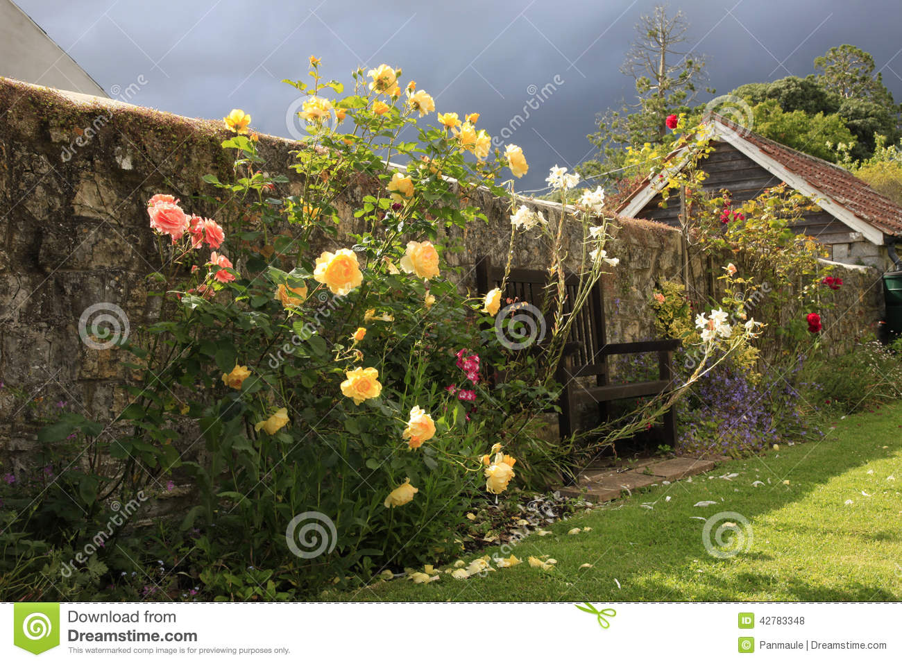 A Flowering Pink And Yellow Bushes Blooming In An English Country Garden With Approaching Rain Storm
