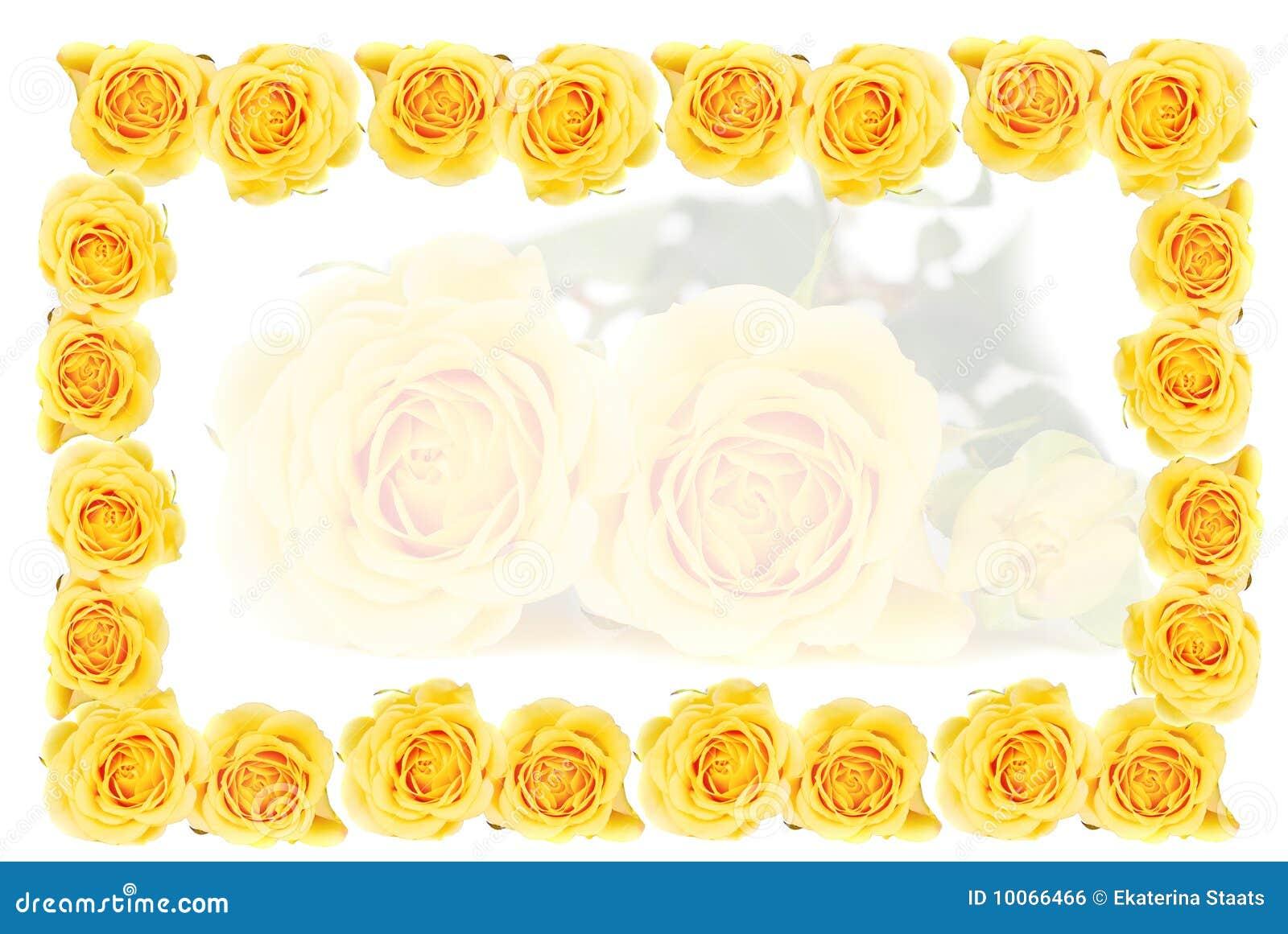 Yellow Roses Frame Royalty Free Stock Image Image 10066466