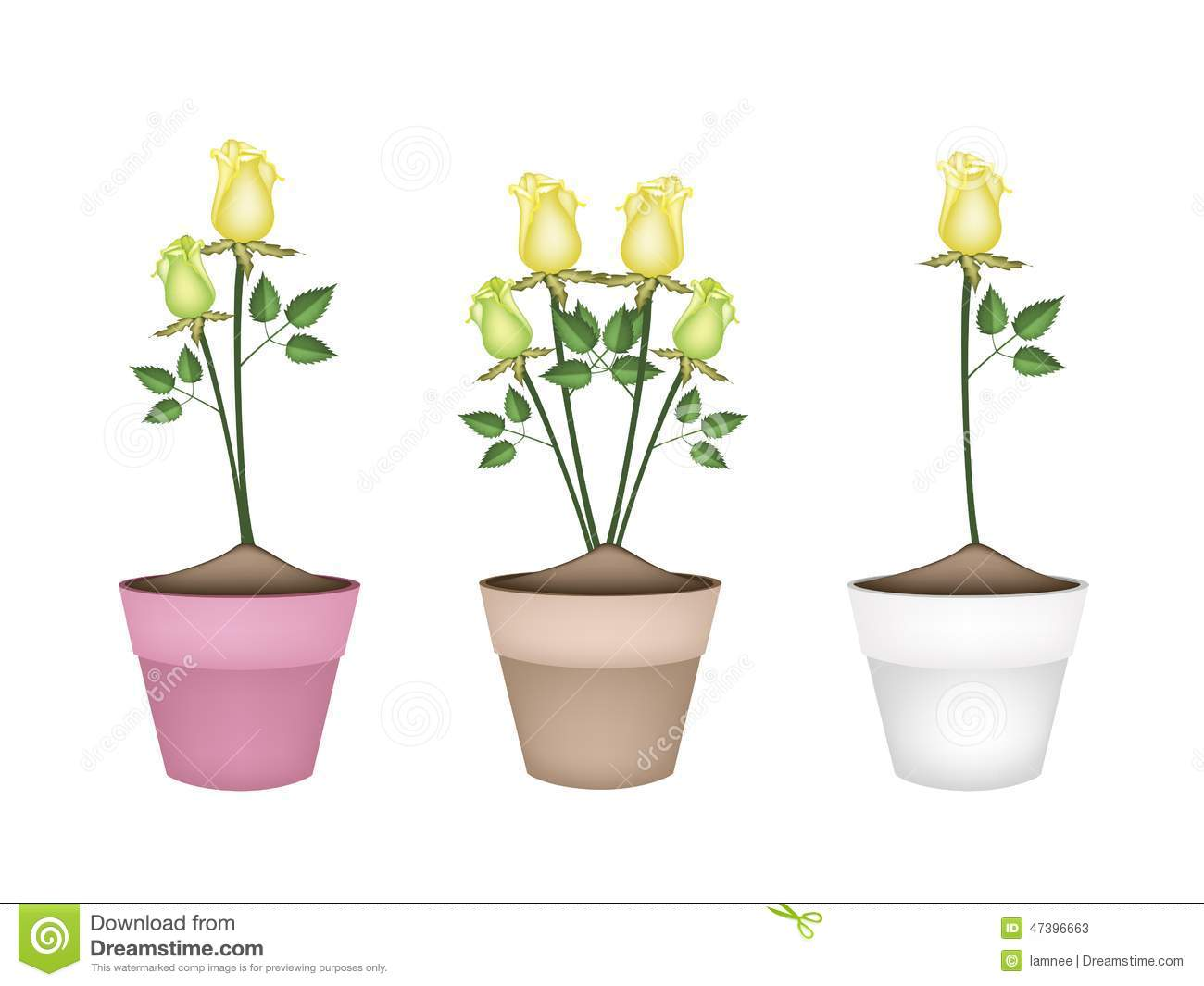 Yellow Roses In Three Ceramic Flower Pots Stock Vector