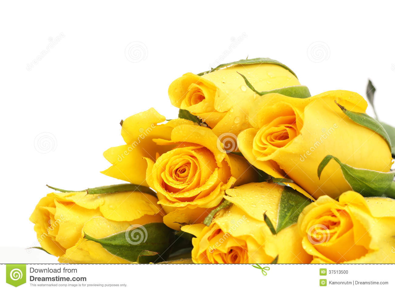 yellow roses with water drops - photo #33