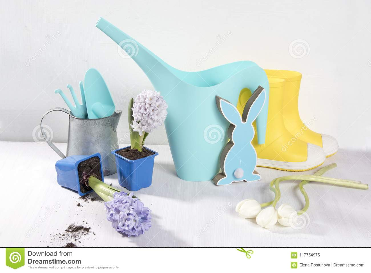 Blue Watering Can With A Bouquet Of Flowers Of White And Pink Tulips ...