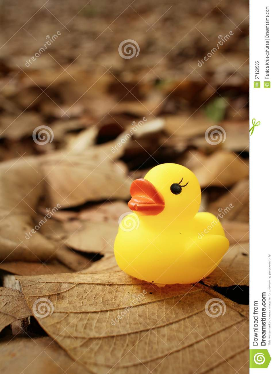 Yellow Rubber Duck On Background Of Brown Leaves. Stock Image ...