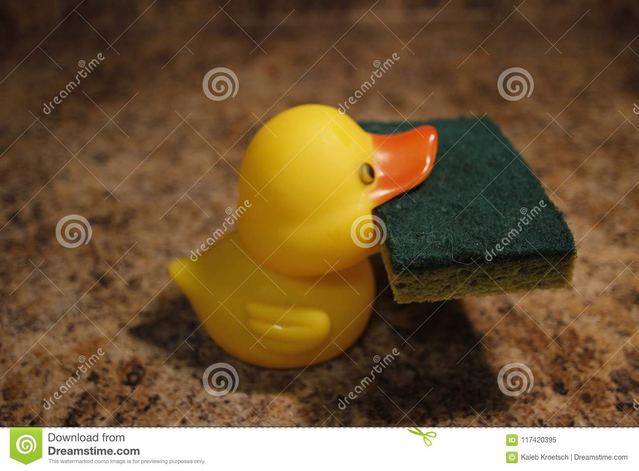 Yellow Rubber Duck Isolated Holding A Sponge Stock Image - Image of ...
