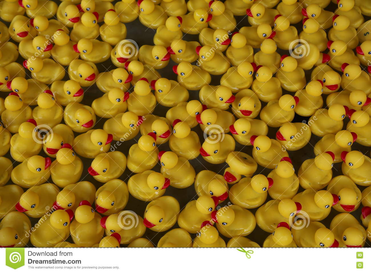 Yellow Rubber Duckies stock photo. Image of duckies, pond - 82416364