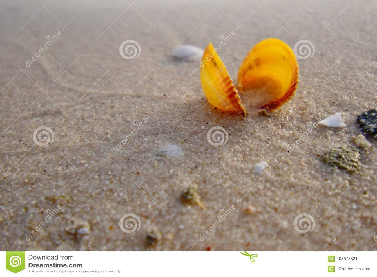 Yellow sea shell on the golden sand of the beack