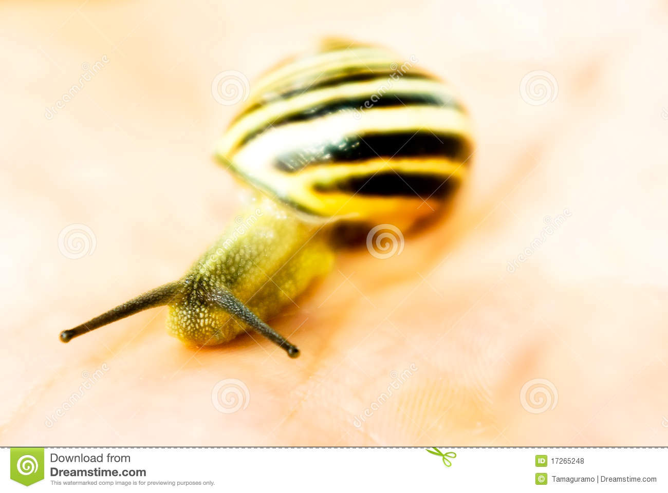 Download Yellow snail macro stock photo. Image of slow, nature - 17265248