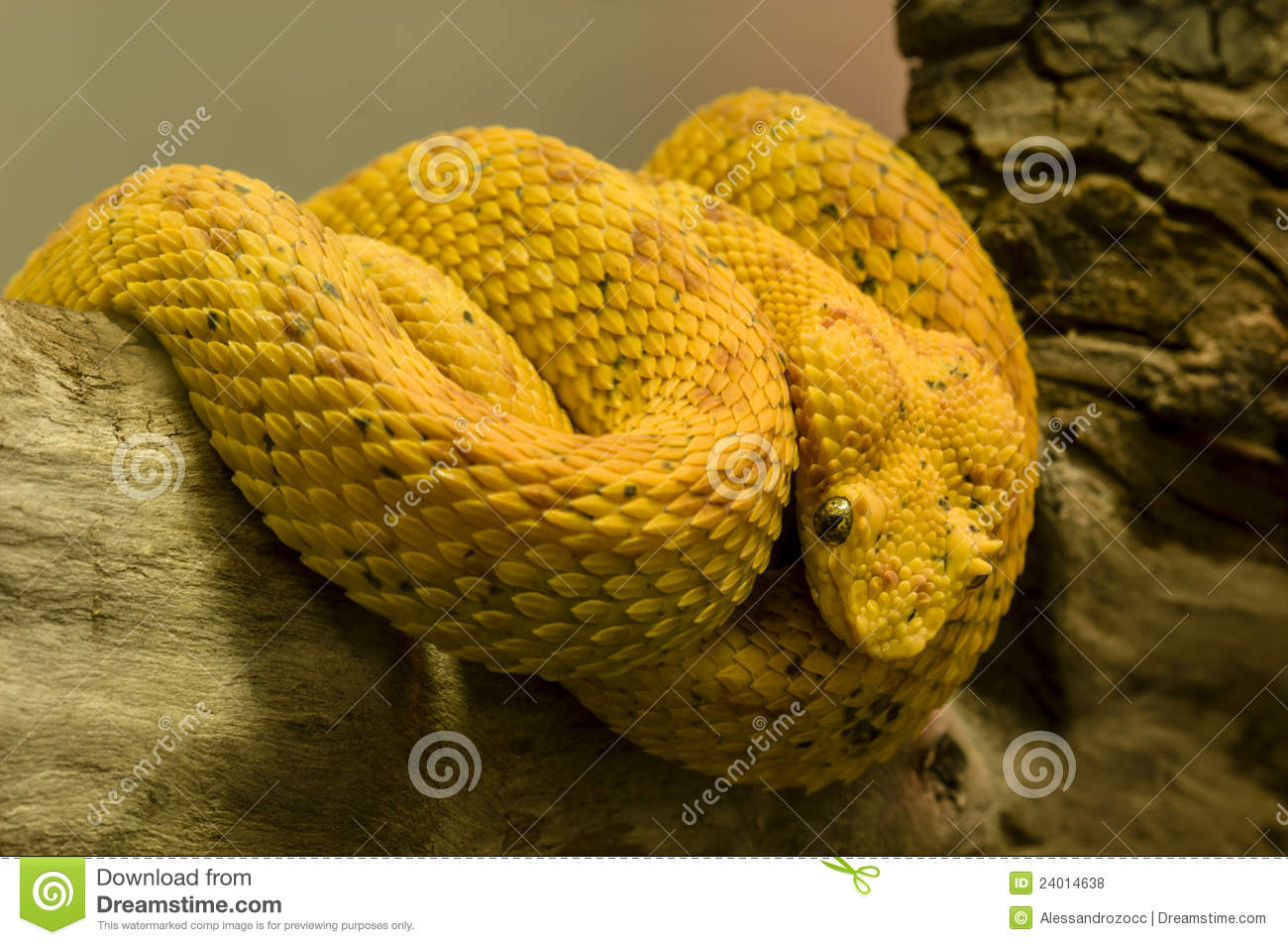 Yellow Snake Royalty Free Stock Photos - Image: 24014638