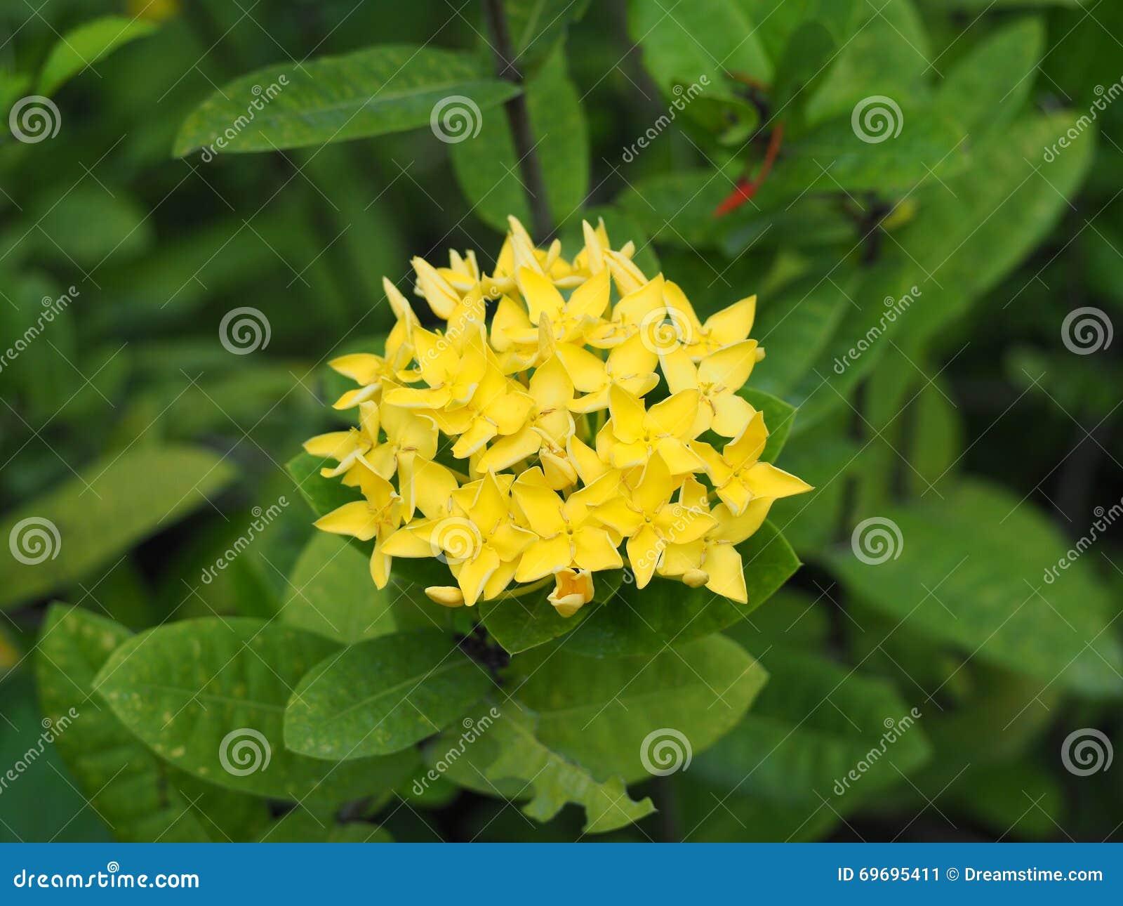 Yellow spike flower