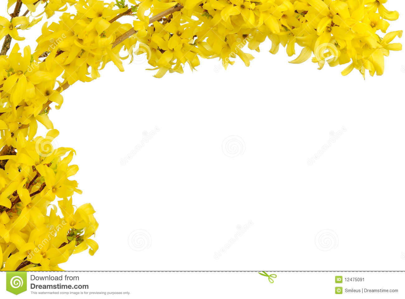 Yellow Spring Blossoms Border Stock Image - Image: 12475091
