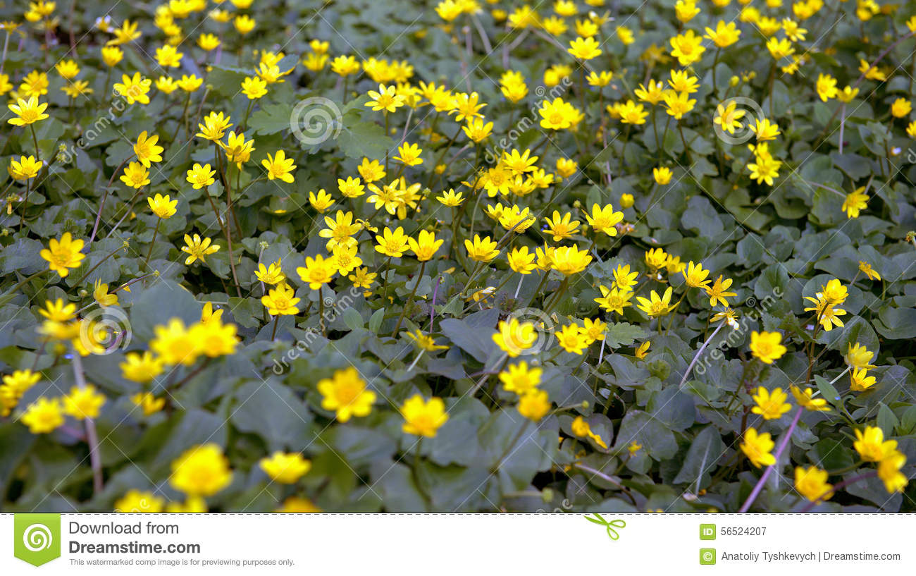 Yellow spring flowers stock image image of trees summer 56524207 yellow spring flowers mightylinksfo