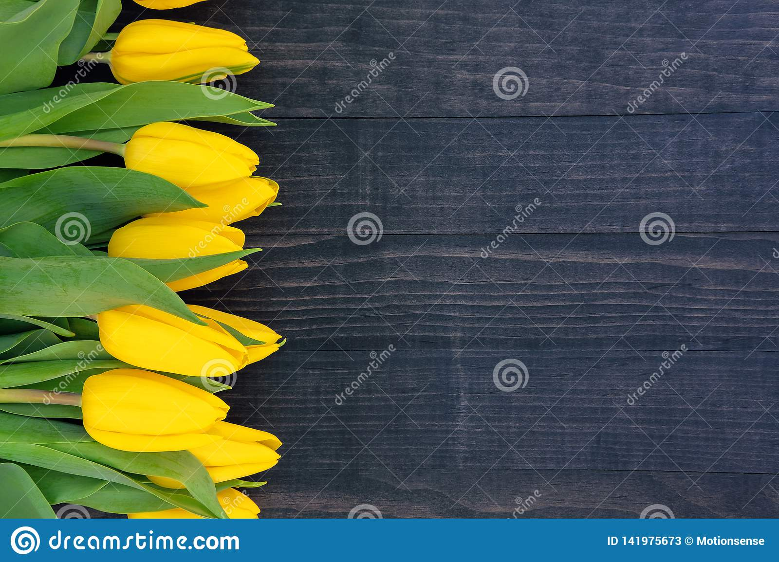 Yellow tulips on the dark wooden background with copy space