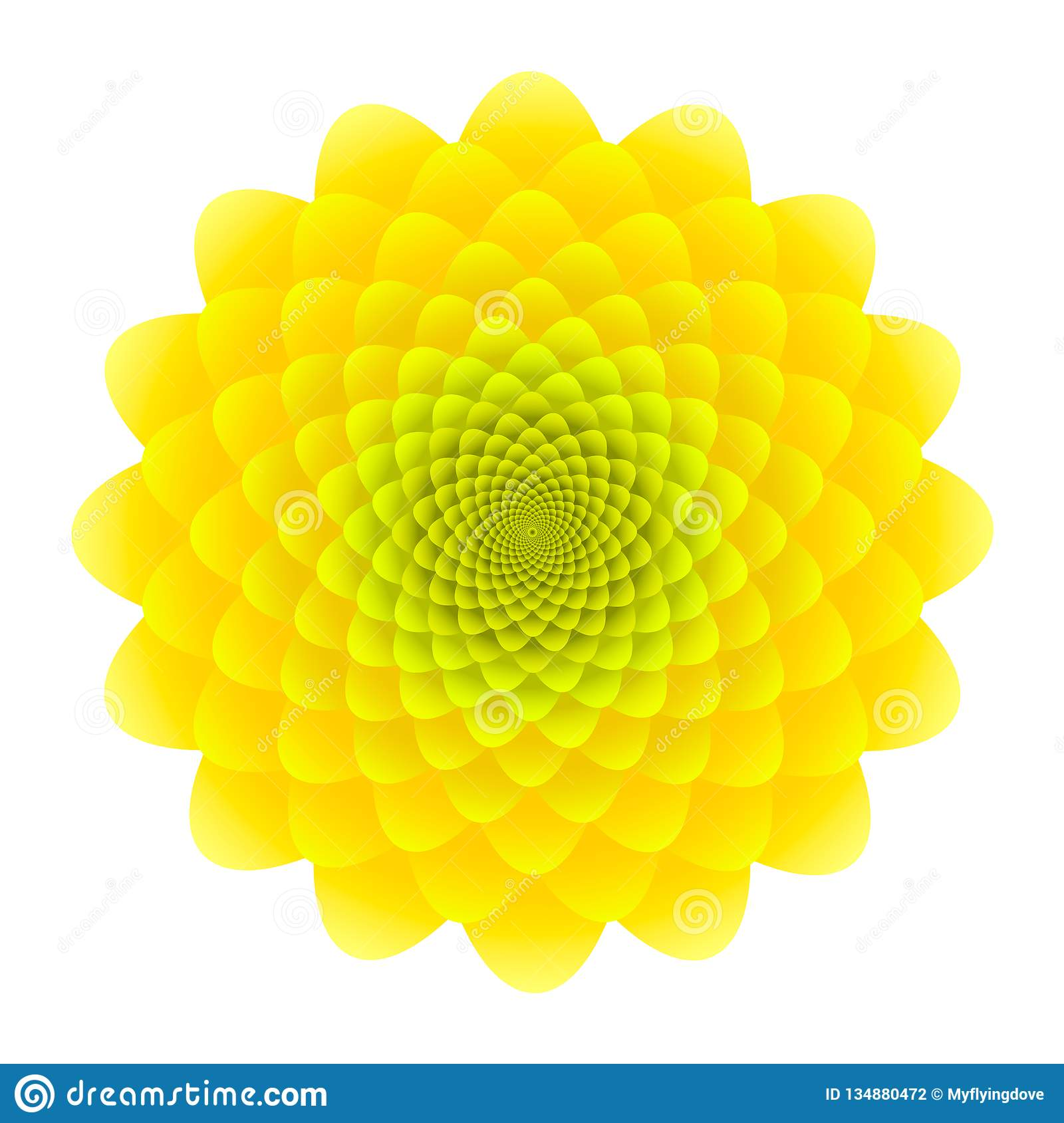 Yellow Sunflower inflorescence. Abstract floral pattern isolated on white background