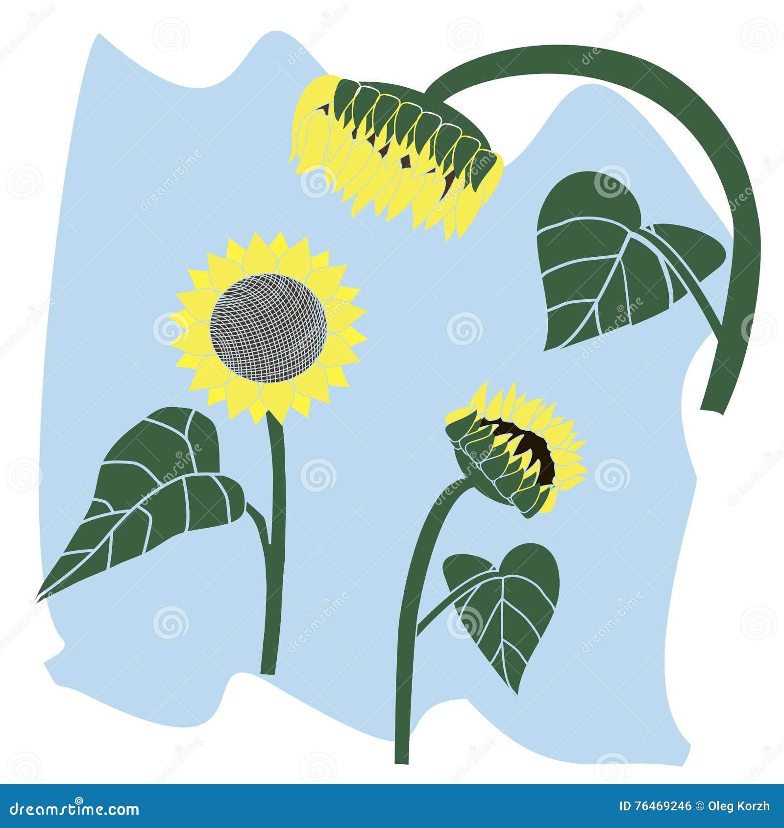 Yellow Sunflower Stock Vector Illustration Of Isolated 76469246