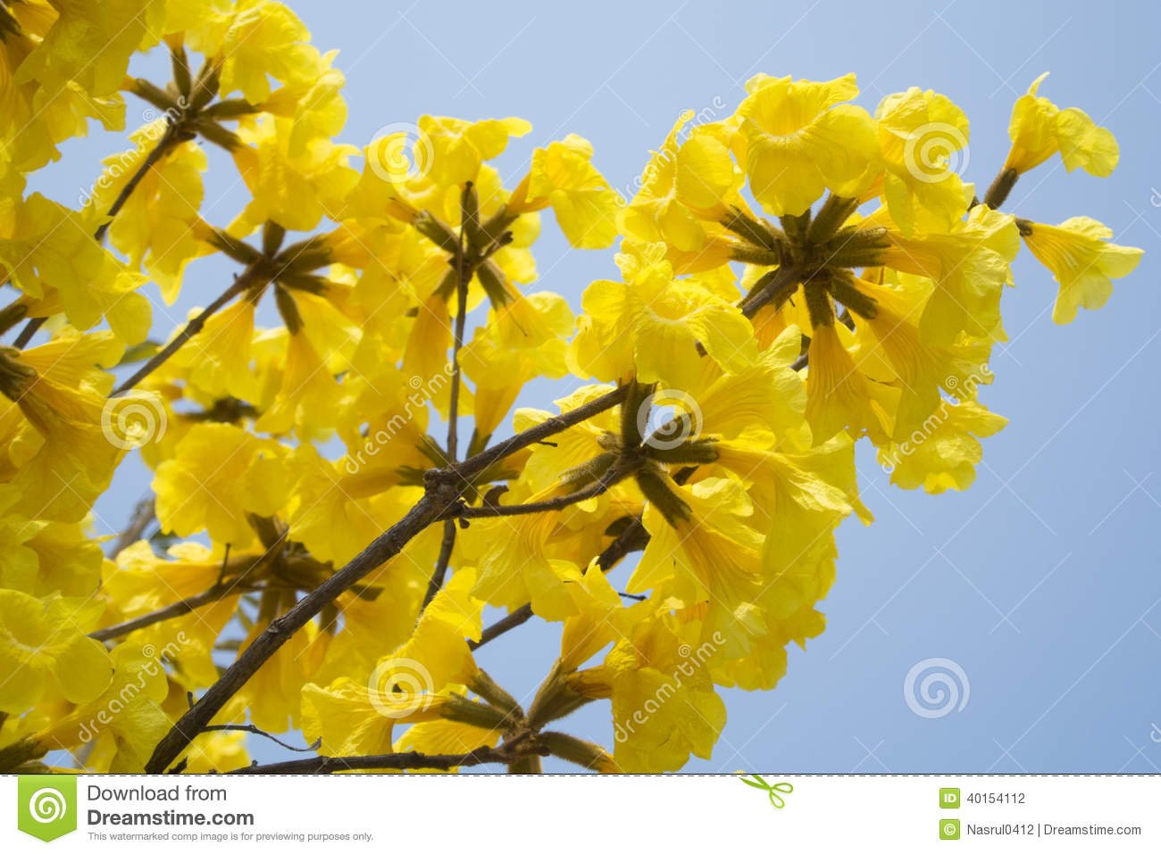 Yellow tabebuia and bicycle stock photo image of sweet bokeh royalty free stock photo mightylinksfo Gallery