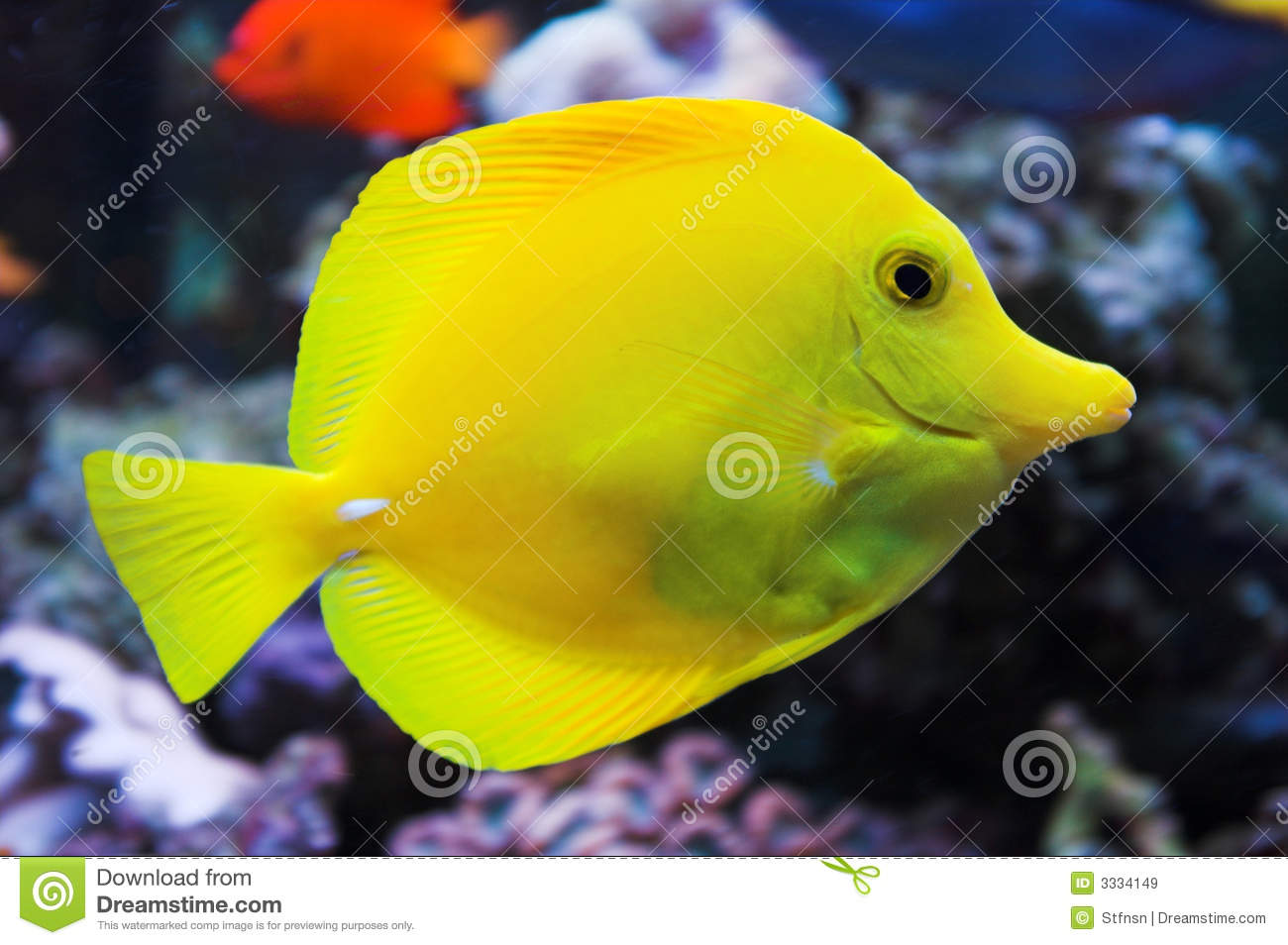 Licenses to sell fish, frogs or marine organisms