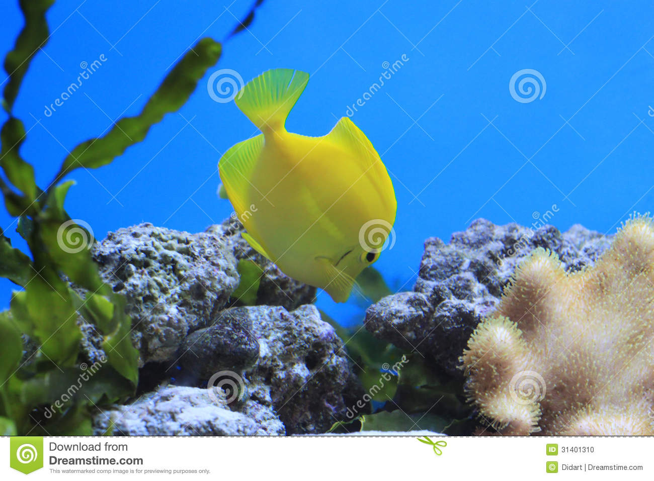Coral reef fish yellow - photo#23