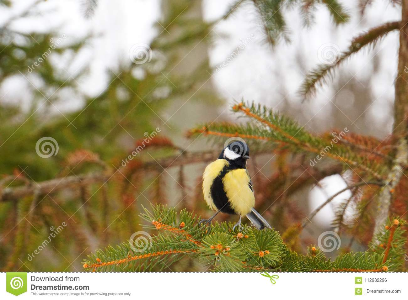 The yellow titmoustit is on the tree.
