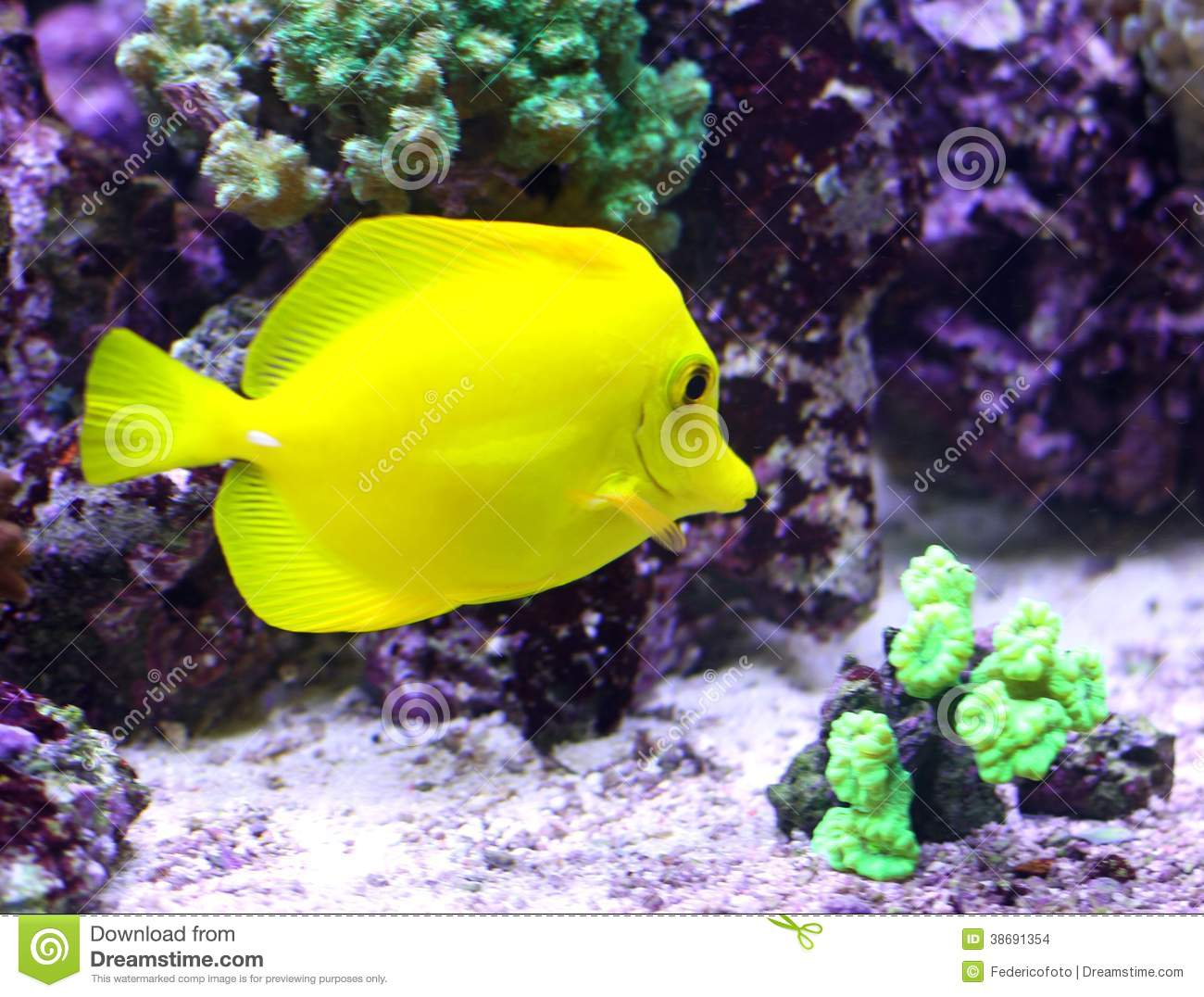 Yellow tropical fish swimming in the sea stock images for Yellow tropical fish