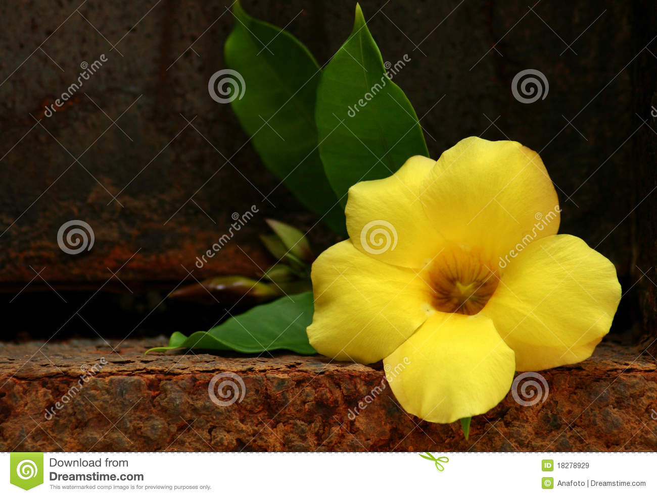 yellow tropical flower royalty free stock images  image, Beautiful flower