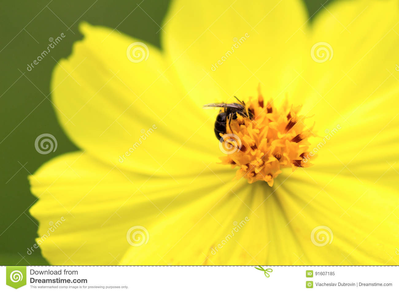 Yellow Tropical Flower With Small Fly In Center Flower Stamen And