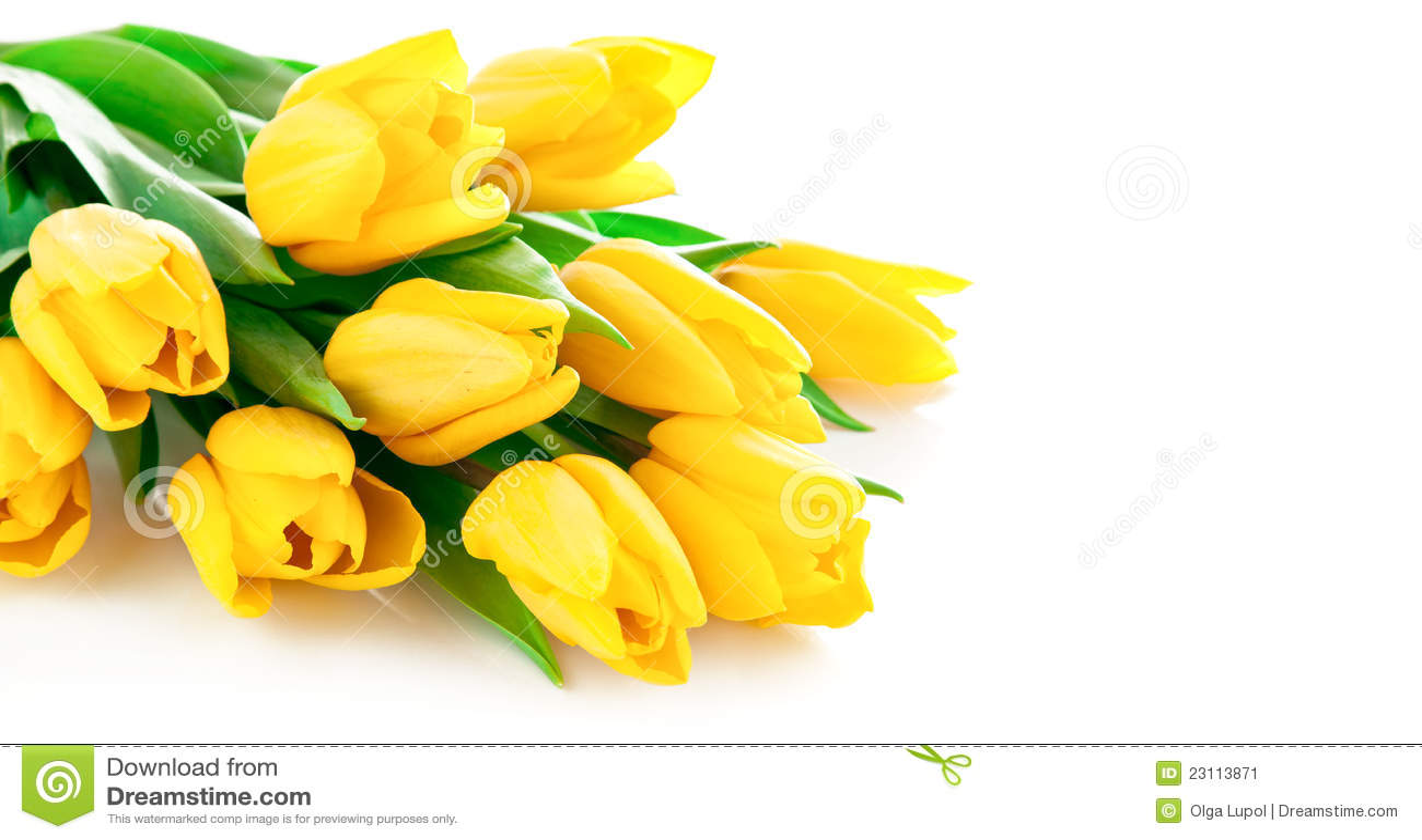 Yellow Tulip Flowers Bouquet Stock Image - Image: 23113871