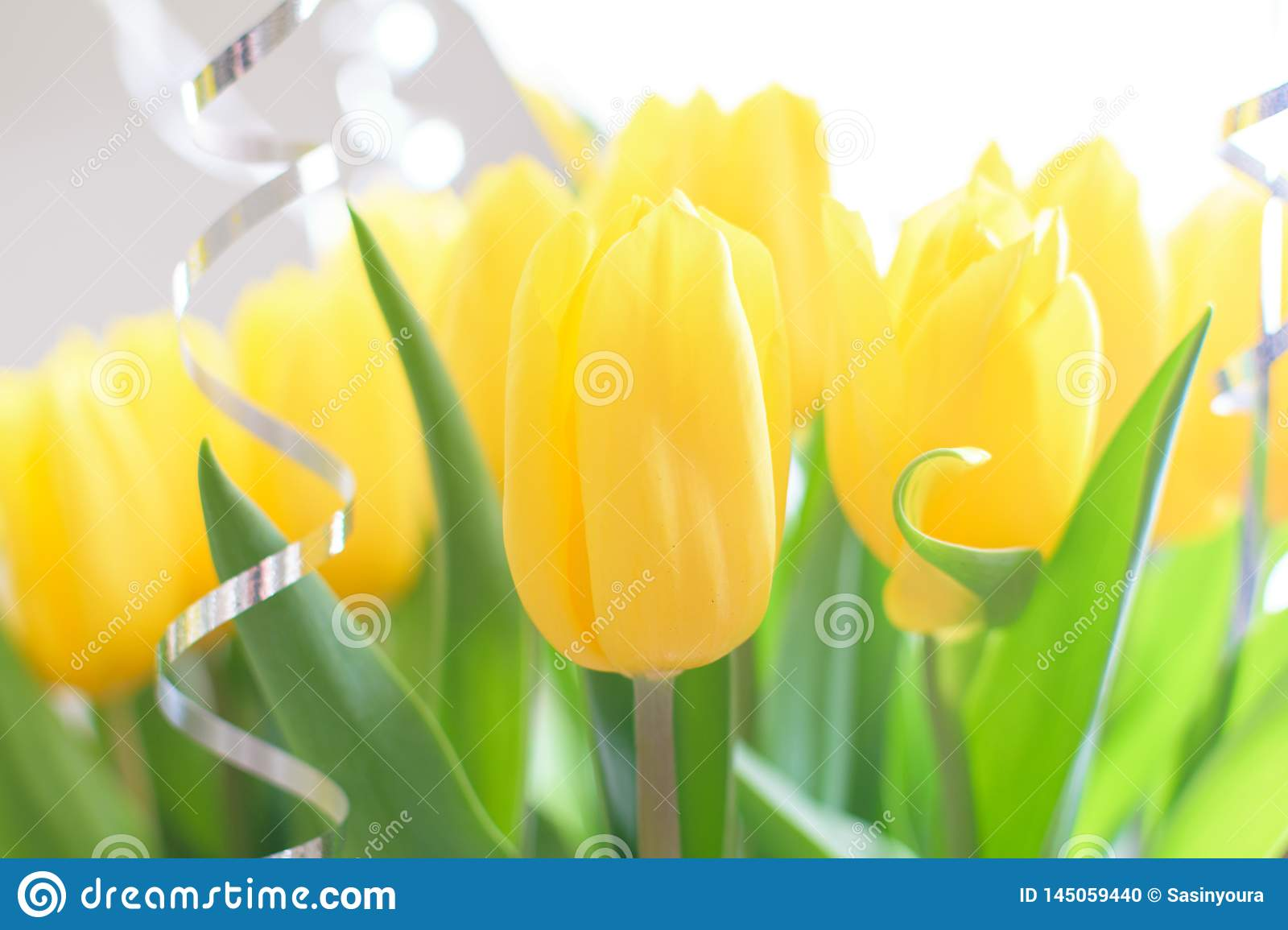 Yellow tulips, beautiful bouquet flowers close-up with blurred background