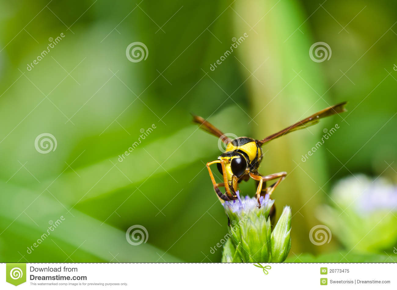how to stop wasps in garden