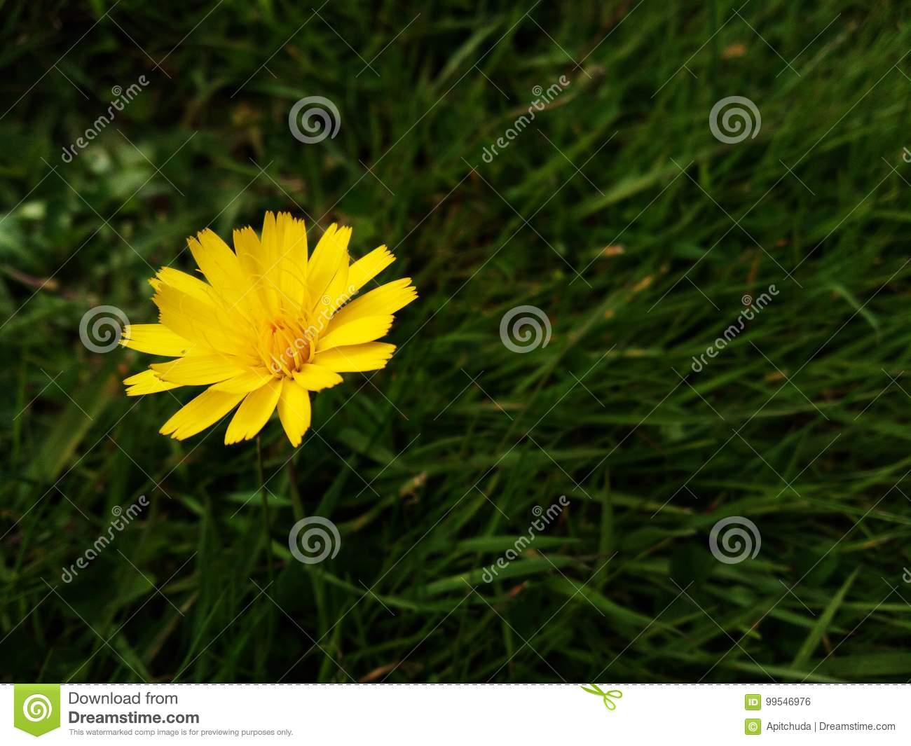 Yellow Weed Flower Stock Photo Image Of Natural Color 99546976