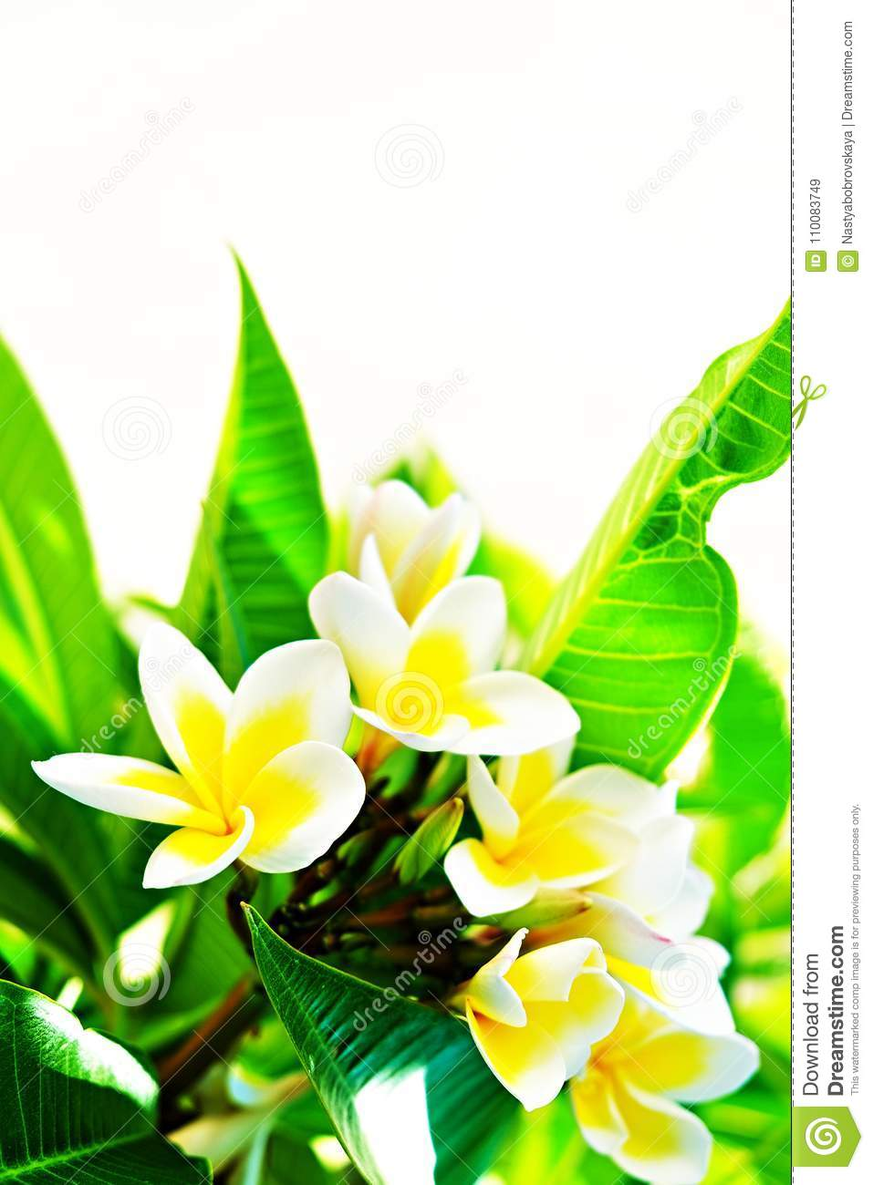 Exotic flowers from tropical contries you deserve a vocation download exotic flowers from tropical contries you deserve a vocation concept beautiful rare plants izmirmasajfo