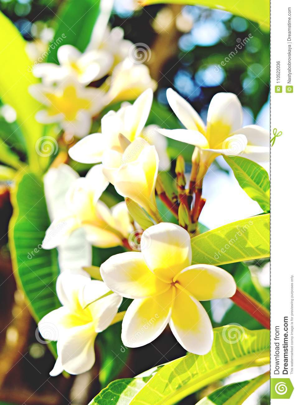 Exotic flowers from tropical contries you deserve a vocation exotic flowers from tropical contries you deserve a vocation concept beautiful rare plants izmirmasajfo