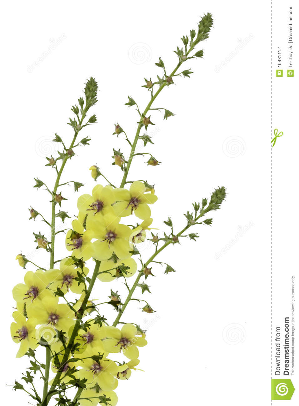 Yellow wild flower stock photo image of leaf background 10431112 yellow wild flower mightylinksfo