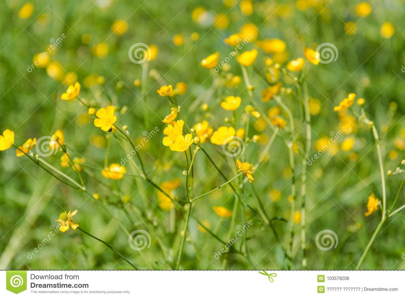 Yellow wild flowers blossoming of a yellow flower stock photo download yellow wild flowers blossoming of a yellow flower stock photo image of mightylinksfo