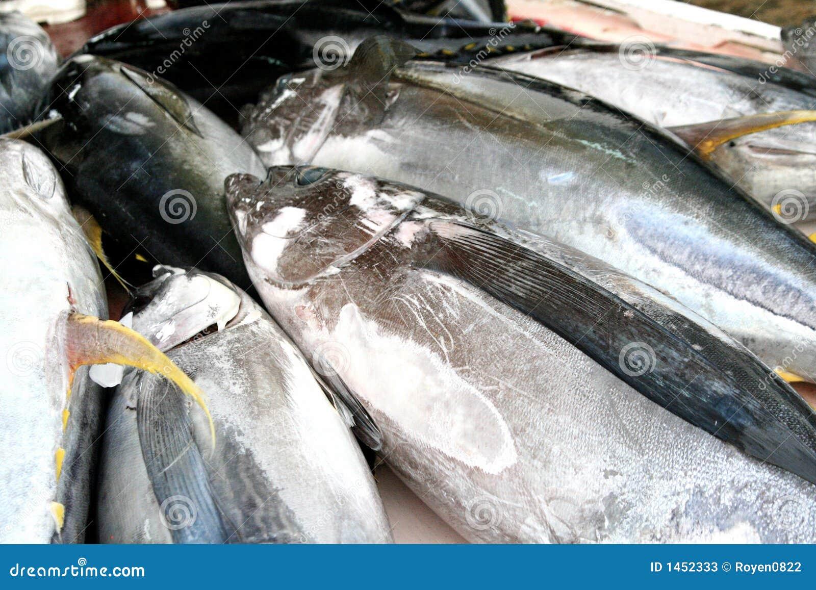how to catch yellowfin tuna trolling