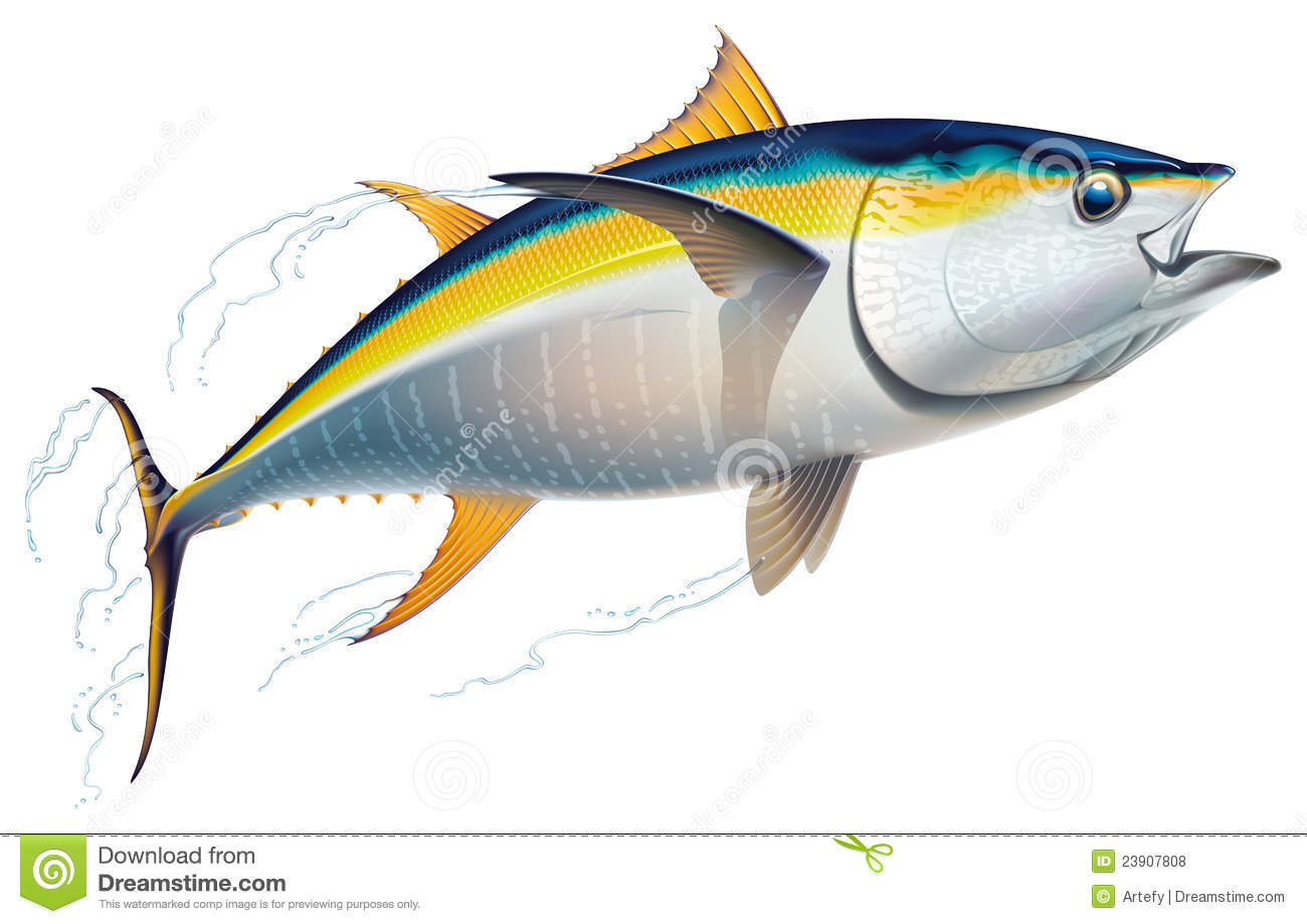 yellowfin stock illustrations 88 yellowfin stock illustrations vectors clipart dreamstime