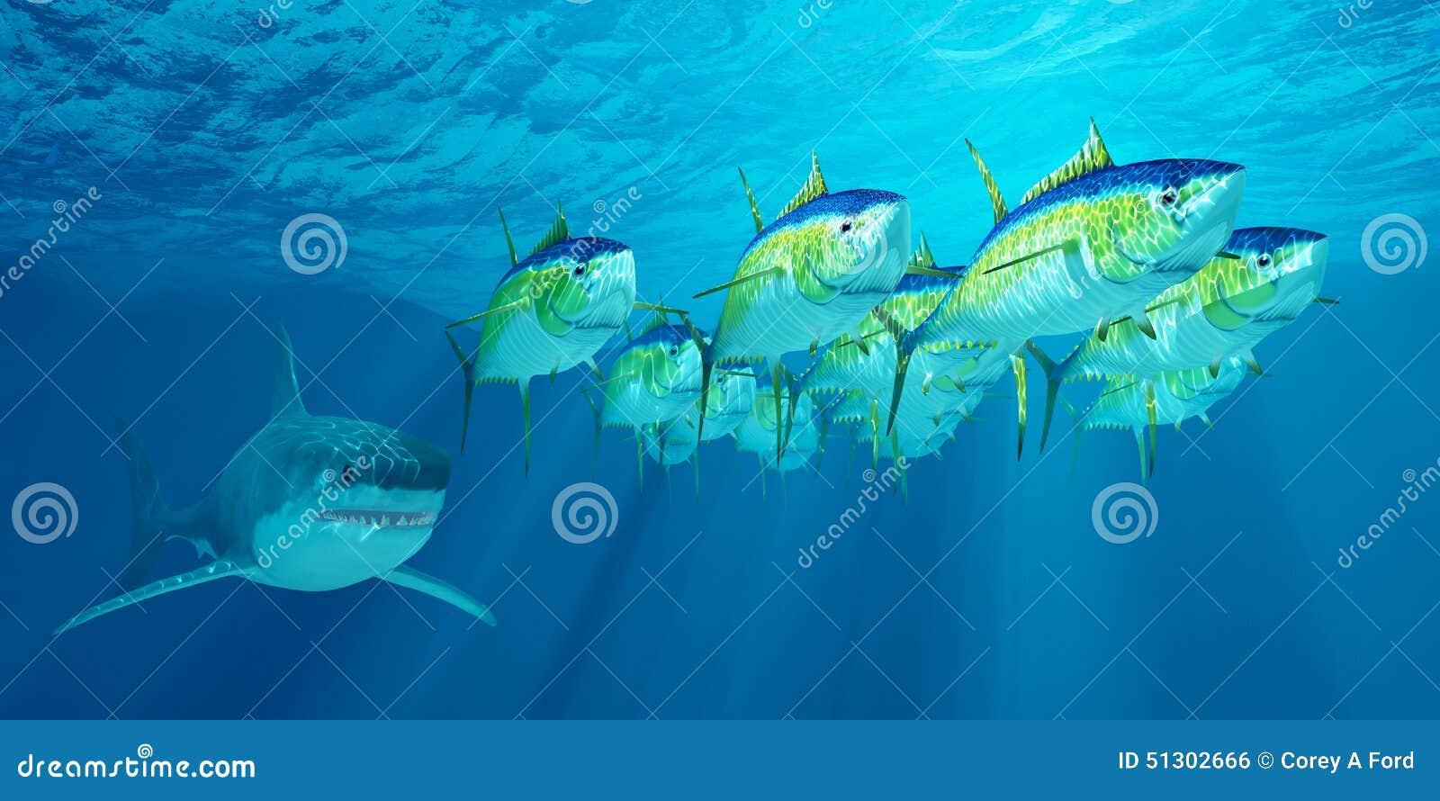 Yellowfin Tuna School ...