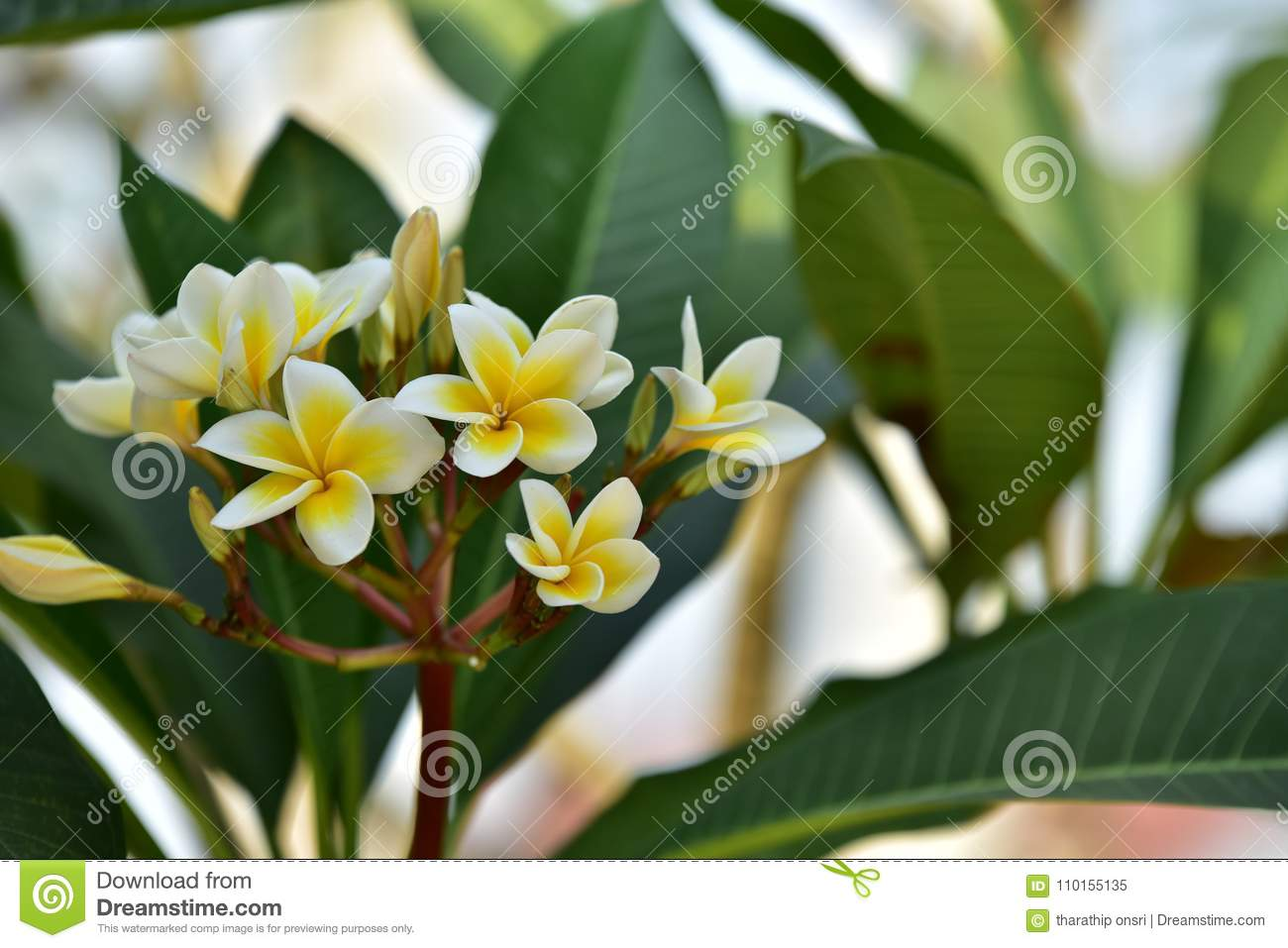 Yellowl Flower And Tree At Sunset Stock Image Image Of Leaves